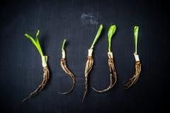 Овощ на предпосылке классн классного Стоковые Изображения RF
