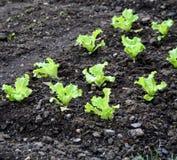 овощ сада кровати Стоковое фото RF