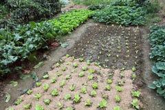 овощ сада органический Стоковые Изображения RF