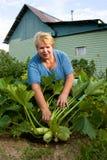 овощ садовника сада ся Стоковая Фотография RF