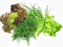 овощ салата установленный Стоковые Фотографии RF