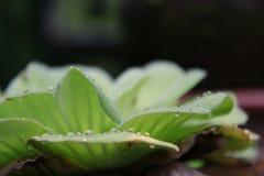 овощ салата еды свежий японский Стоковая Фотография