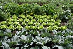 овощ сада Стоковое Изображение RF