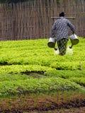 овощ сада Стоковая Фотография
