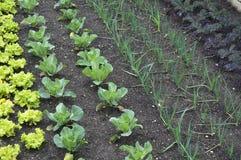 овощ сада стоковые изображения rf