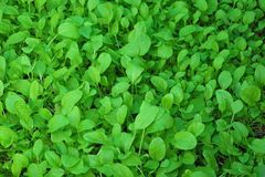 овощ сада Стоковое фото RF