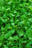 овощ сада Стоковые Изображения