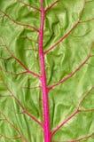 овощ текстуры Стоковые Фотографии RF