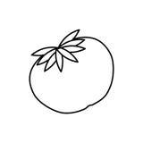 Овощ томата свежий бесплатная иллюстрация