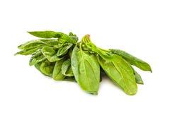 Овощ шпината Стоковая Фотография RF
