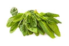 Овощ шпината Стоковые Фото
