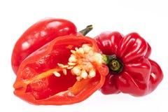 овощ habanero перца красного chili изолированного на белой предпосылке Стоковые Фото