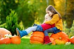 2 довольно маленьких сестры имея потеху совместно на заплате тыквы Стоковое Фото