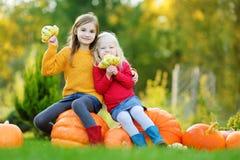 2 довольно маленьких сестры имея потеху совместно на заплате тыквы Стоковые Изображения RF