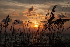 Овсы моря на заходе солнца Стоковое фото RF