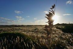 Овсы моря на дюнах приближают к заходу солнца на пляже Северной Каролины Стоковые Изображения