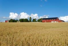 овсы поля фермы горизонтальные Стоковая Фотография RF