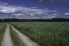 овсы поля Стоковая Фотография