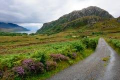 Овца озера в Wester Ross, Шотландии Стоковые Изображения RF