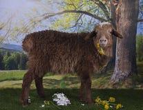 Овцы Брайна пася около леса Стоковые Изображения