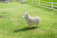Овцы весны Стоковое Изображение
