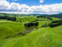 Овцы вида с воздуха обрабатывают землю холм, Rotorua, Новая Зеландия Стоковая Фотография