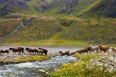 Овцы в долине горы стоковое изображение rf