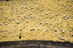 Овцы в открытой земле Стоковые Фотографии RF