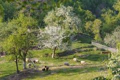 Овцы в долине стоковая фотография