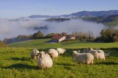 Овцы в Gainza, Gipuzkoa Стоковое Изображение RF