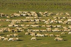овцы группы стоковое фото
