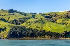 Овцы и выгоны в Новой Зеландии Стоковые Изображения RF