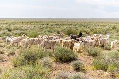 Овцы и козы идя в прерию с концом куста вверх Стоковые Фото