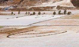 Овцы и коровы на выгоне покрытом с снегом Стоковые Фотографии RF