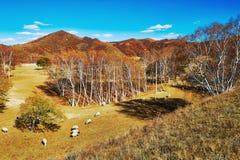 Овцы на горном склоне Стоковое Фото
