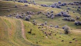овцы на полях Стоковое Изображение