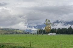 Овцы на ферме Новой Зеландии стоковое фото