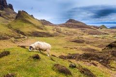 Овцы пася в гористых местностях стоковые фото