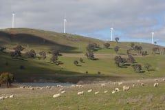 Овцы пася на ветровой электростанции Carcoar Carcoar Стоковое фото RF