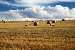 Овцы под облаками стоковые фото