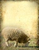 овцы предпосылки иллюстрация вектора