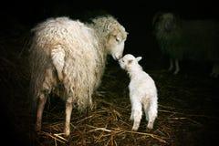 Материнский инстинкт Стоковая Фотография RF