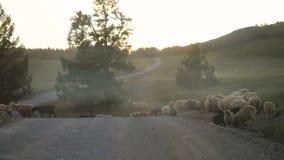 Овцы скалистой горы на дороге во времени захода солнца в замедленном движении, 3840x2160 видеоматериал