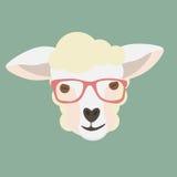 Овцы смотрят на с стеклами битника дальше Стоковые Изображения RF