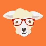 Овцы смотрят на с стеклами битника дальше Стоковое Изображение RF