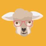 Овцы смотрят на с стеклами битника дальше Стоковые Изображения