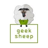 Овцы с компьтер-книжкой Стоковая Фотография