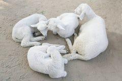 Овцы с молодыми овцами мать s дня Стоковые Фотографии RF
