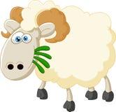 Овцы шаржа есть траву Стоковые Фото