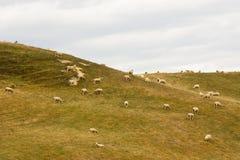 овцы zealand холма новые Стоковое Изображение